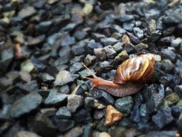 Keep Calm and Snail Along by tridaln08