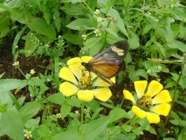 Yellow Flower and Butterfly by leandroconradt95