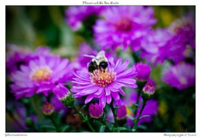 Flower and the Bee Macro by yellowcaseartist