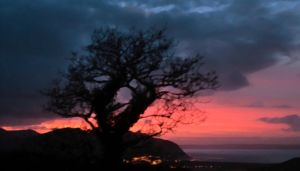 Tree in the Sunset 1 by MakinMagic