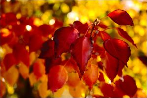 Red leaves near and far by wildplaces