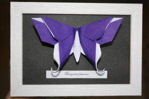 Michael LaFosse Butterfly by Kusu-dama