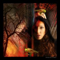 M11 Girl with two Birds by Xantipa2-2D3DPhotoM