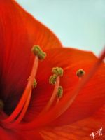 Macro by Tornquist
