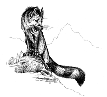 Tiger Wolf by Falcolf