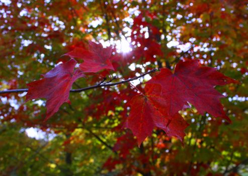 Colourful Canopy and Quotes by KeswickPinhead