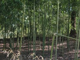 Bamboo Thicket by Nept