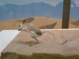 Desert Mouse by raindroppe