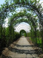 Arbor by bean-stock