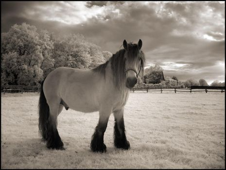 The Horse IR Infrared by MichiLauke