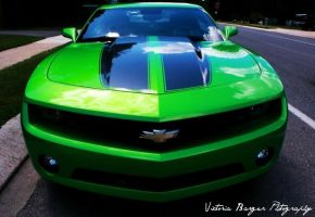 Lime Green Camaro by victoriabarger