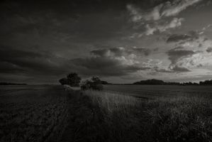 Stubble Under Evening Sky. by eternumviti