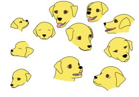 Labrador Head Practices by McFit