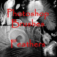 PS Feather Brushes - set 1 by firebug-stock