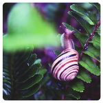 Over the rainbow - snail by Alabastra