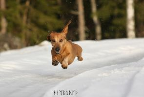 flying dog by Hembrygd