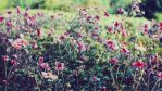 FLOWERS - 1920x1080 WIDESCREEN WALLPAPER by illusionality