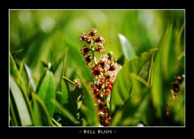 Bell Buds by bleaches