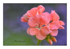 Flower 48 by Phototubby
