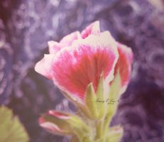 Just another day dream by ELaiNes-DarkRoom