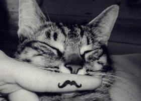 Cat Mustache by un-expired