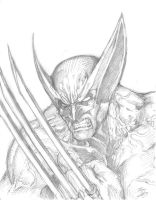 BCC 2013 Wolverine Drawing by phil-cho