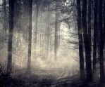 Background stock forest by 1989juni