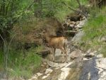 Rocky Mountain Doe by 4TheLoveOfNature