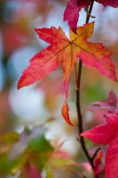 Autumn leaves 1 by TheEtherealSoul