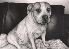'Gucci' dog graphite drawing by Pen-Tacular-Artist