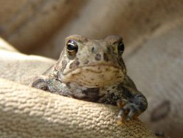 Tiny Toad 4 by FantasyStock