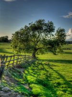 HDR Tree by paradoxofminds