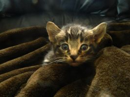 I want a Kitten!!! by Matthew-Fuller