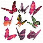 Butterfly Stock 4 by Shoofly-Stock