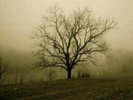 Tree in fog.L102 0653 by harrietsfriend