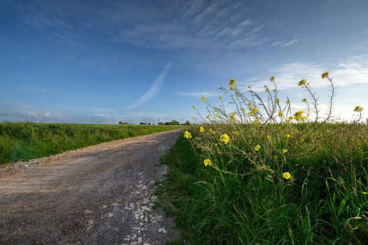 Beauty and Simplicity of Spring in Normandy by Jean-Baptiste-Faure