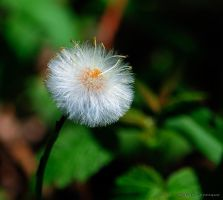 Delicate by imonline