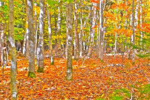 fall colors 2 by whiterino