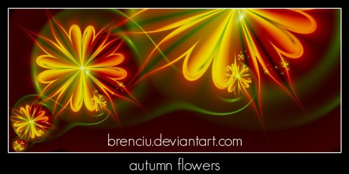 autumn flowers by Brenciu