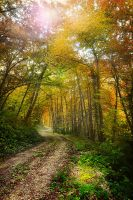 The road to paradise by JPGphotos