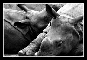 Rhino Love by Julian-Bunker