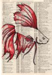 betta fish01 by spud