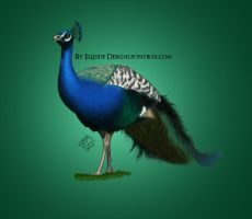 Peacock by EquideDesigns