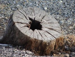 tree stump by SwtCreations