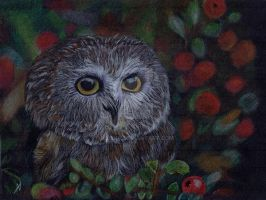 Owl. by valakh
