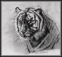 Tigre by turkill