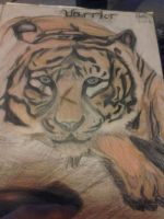 my tiger :D by vincinero