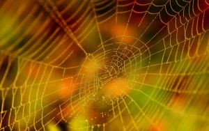 Halloween Spider Web by Casperium