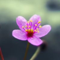Anonymous Flower by MKho