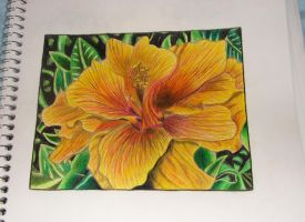 Flower Colored Pencil Practice by yobanda